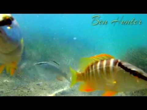 Feeding the fish in Bloody Bay , Jamaica
