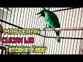 Masteran Cucak Ijo Tembakan Kasar Paling Ampuh  Mp3 - Mp4 Download