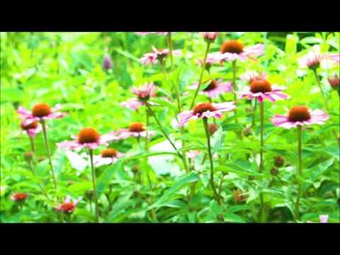 Oder besser Phlox Flammenblume Kirmesländer und Sonnenhut im Sommergarten