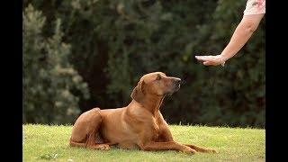 Игровой метод дрессировки собак