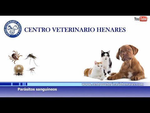 tratamiento de parásitos sanguíneos en perros