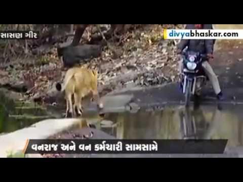 Lion pass road in sasangir