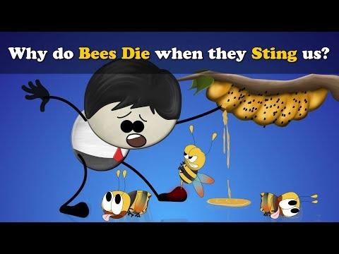 Why Do Bees Die When They Sting Us?   #aumsum