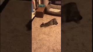 Funniest CAT Videos -- Funny CAT Videos Compilation(Episode 37 ) 2018.mp4