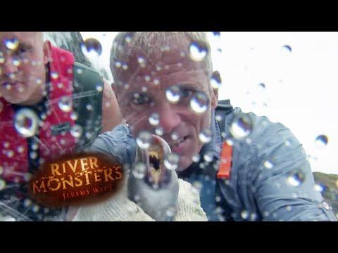 Lamprey Hunting At Willamette Falls - River Monsters