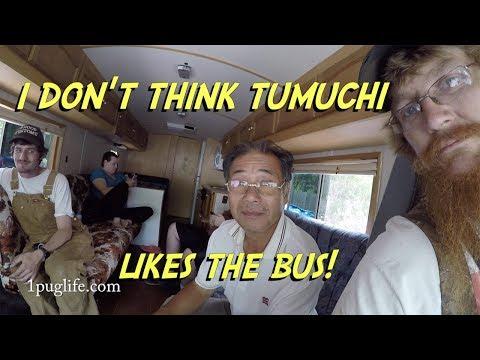 taking tumuchi to the market