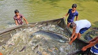 Amazing Net Fishing | People Catching Huge Big Fish With Net | Monster Fishing