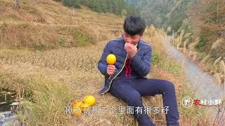 小伙无意间发现8个野果,无数人看了都不敢摘,有没有人认识的! thumbnail