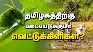 Entomologist about locust | Kumudam