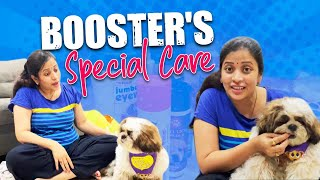 Special Items for My Pet Dog Booster Puppy Grooming  Dog Daycare Vlog  Booster Prabhanjan