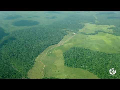 Deforestación en Parque nacional natural Tinigua