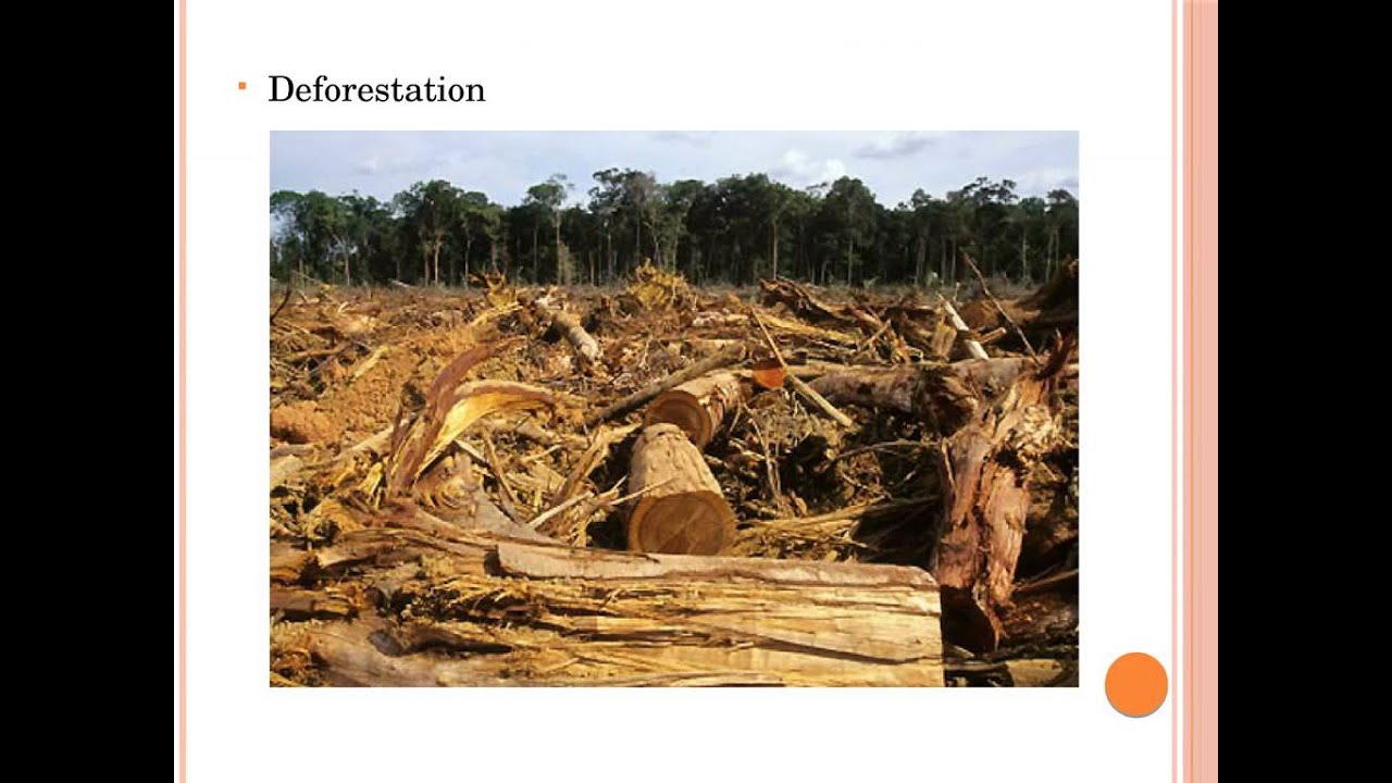 deforestation and climate change Deforestation and climate change and millions of other books are available for amazon kindle learn more enter your mobile number or email address below and we'll send you a link to download the free kindle app.