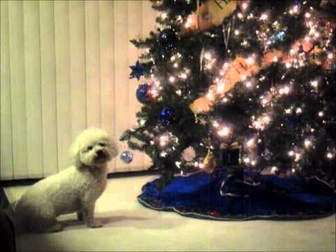 dog attacks christmas tree