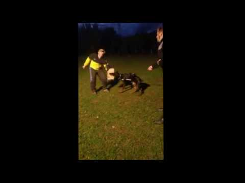 The Best Protection Dogs  Night Training Doberman Pinscher