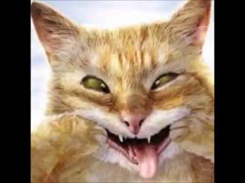 "Heywood Banks ~ ""The Cat Got Dead"""