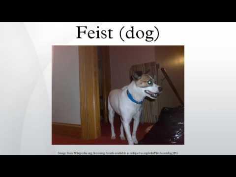 Feist (dog)