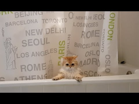 CAT BLOOPER – Smoothie Falls In Bathtub