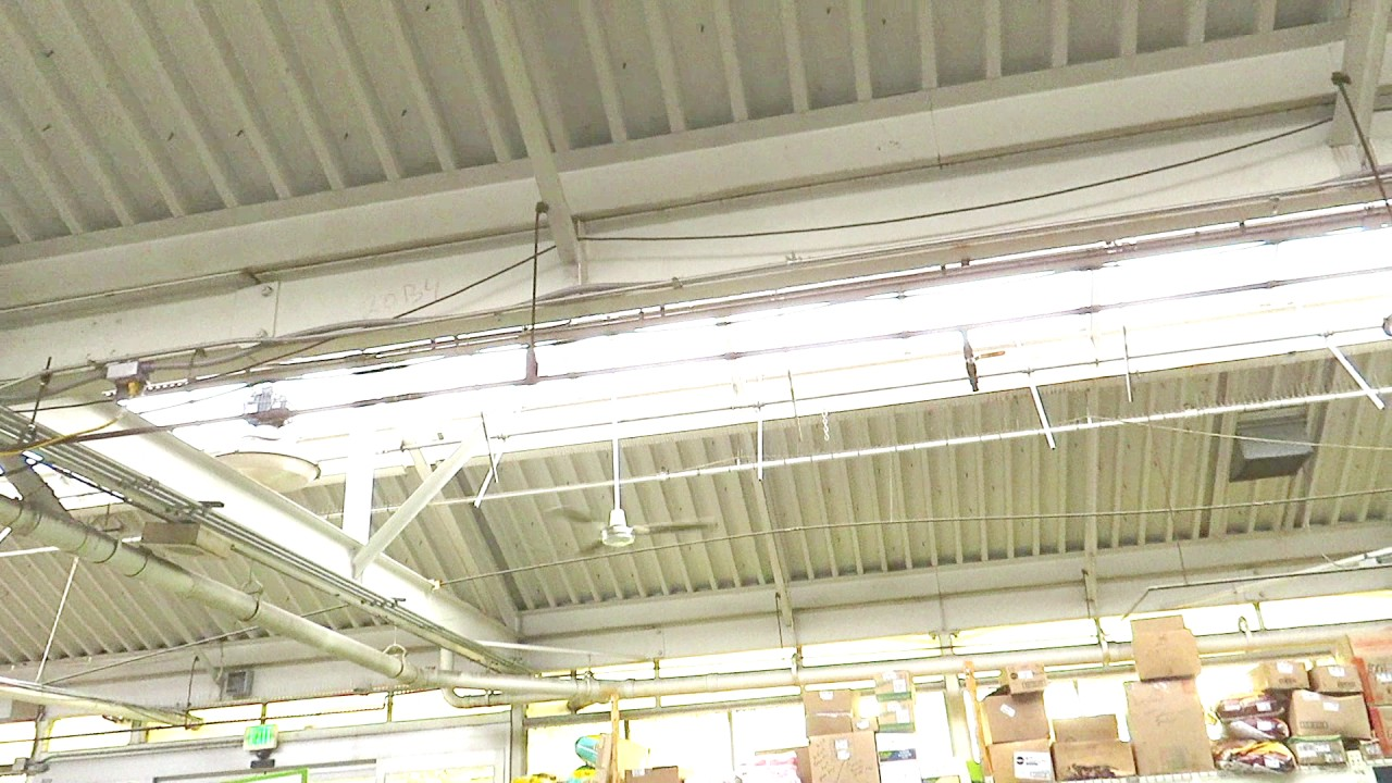 56 Quot And 48 Quot Dayton Industrial Ceiling Fans 1 6 Of 12