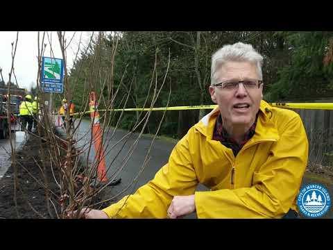 Meet The New Iron Trees Along North Mercer Way
