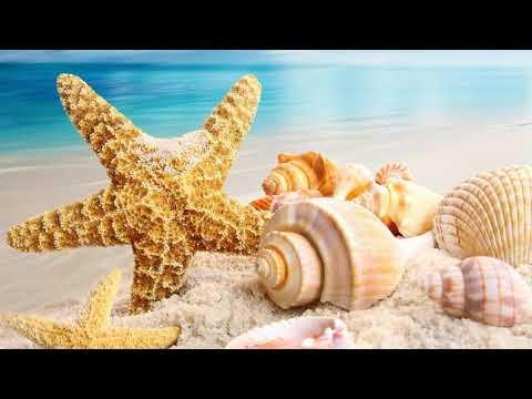 Kıssa'dan  Hisse  Serisi   -  Deniz Yıldızı'nın Öyküsü