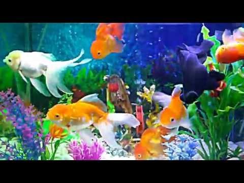 Bể cá vàng