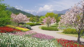 [ 4K Ultra HD ] 春の国営アルプスあづみの公園 Alps Azumino National Government Park in Spring (Shot on RED EPIC)