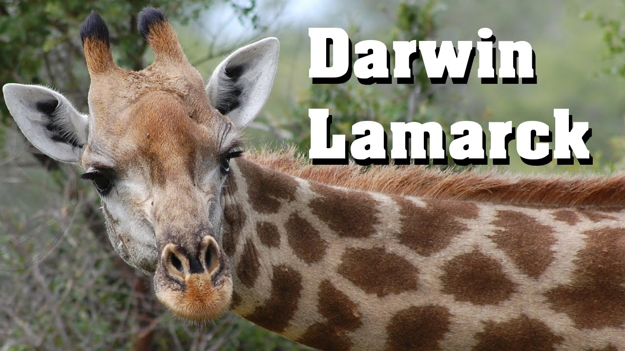lamarck vs darwin Mini-lesson lamarck vs darwin: dueling theories richard firenze from reports of the national center for science education, july/aug 1997, vo17, no4, pp9-11.
