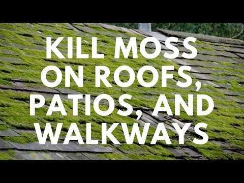 How to Kill Moss on Roofs, Patios, and Walkways - MOSS B WARE