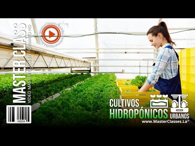 Cultivos hidropónicos urbanos - Tus alimentos crecen un 50% más rápido.