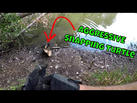 Removing AGGRESSIVE Turtle From Pond   SNAPPING TURTLE   B Fishing  