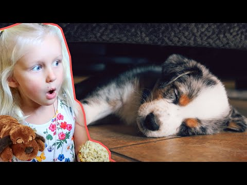 how-to-stop-puppy-from-crying-and-whining!