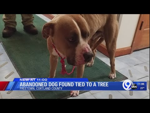 Abandoned dog found tied to a tree in Cortland County
