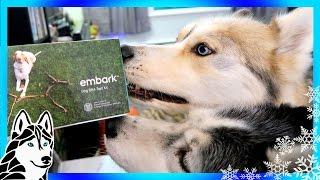 HUSKY OR MALAMUTE | Dog DNA Test Embark thumbnail