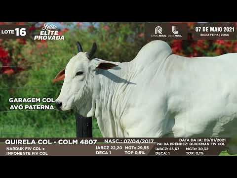 LOTE 16   COLM 4807