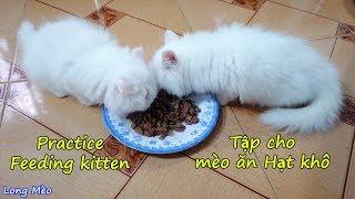 Practice Feeding Kitten - Tập cho Mèo ăn Hạt Khô | Long Mèo