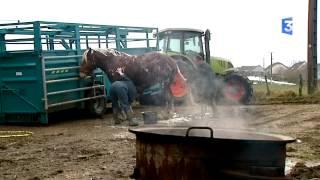 SIA 2015 : Des éleveurs du Doubs et leurs champions pour les concours d'élevage