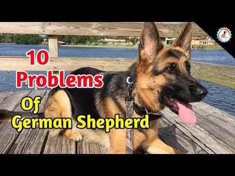 10 Problems OF German Shepherd / In Hindi / German shepherd problem