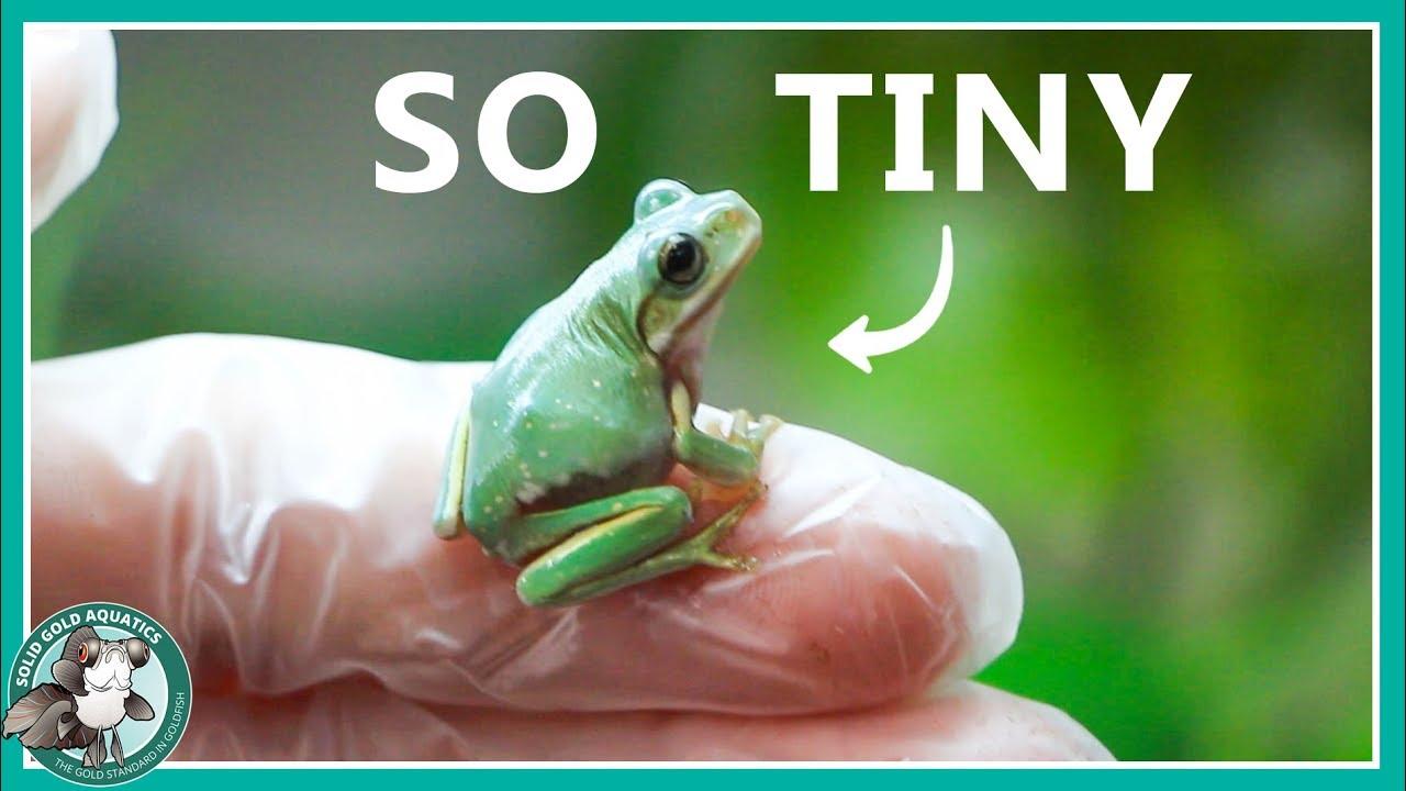new-baby-tree-frog