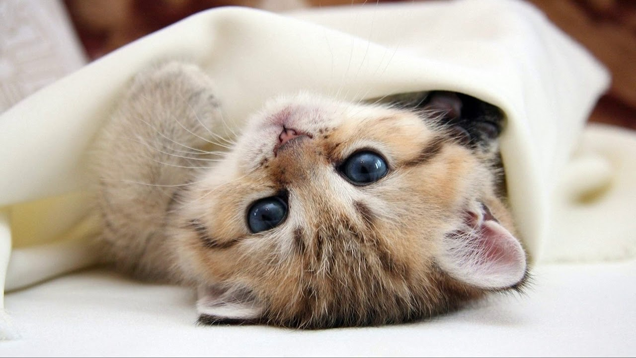 cute cat kitten hd wallpaper images video- must watch and download