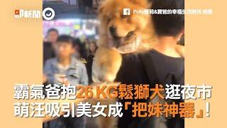 霸氣爸抱26 KG鬆獅犬逛夜市 萌汪吸引美女成「把妹神器」!