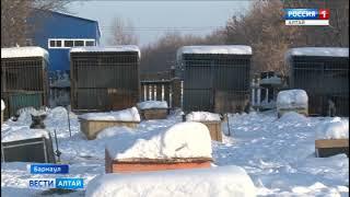 В «Ласке» рассказали об угрозах отравления собак