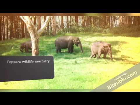 Top 15 wildlife sanctuaries and national parks in Kerala