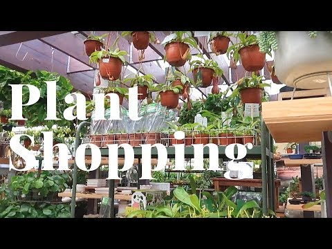 Plant Shopping at Nick's Garden Center | JULY 2019