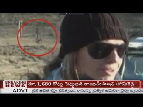 5 Unexplained Creature Sightings Caught During Live T.V. Segments...