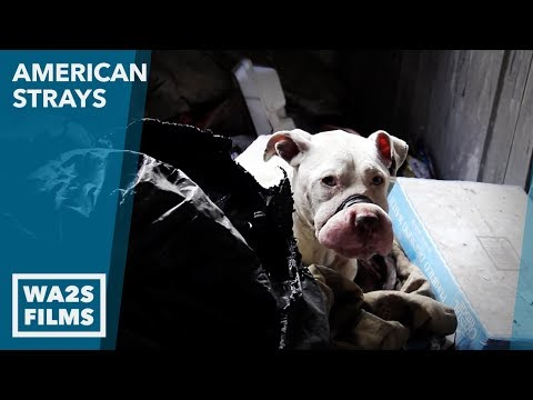 Abandoned Scared Bait Dog Rescued by Animal Cops Detroit with Deb MacDonald and Mark Ramos
