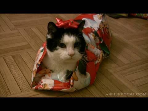 Wie man eine Katze in Geschenkpapier einpackt!