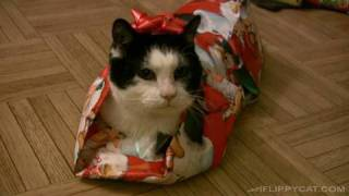 How To Wrap A Cat For Christmas thumbnail