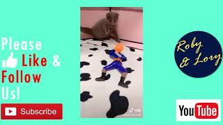 Toy Soldier Scared Kitten Funny Shorthair Cat Video