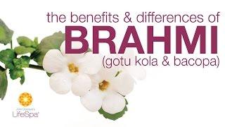 The Benefits & Differences Between Brahmi (Gotu Kola) and Bacopa | John Douillard's LifeSpa
