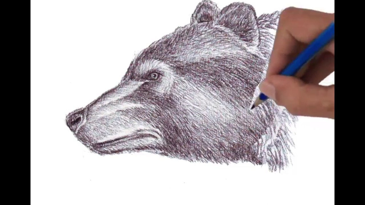 How To Draw Head Of Grizzly Bear Side View